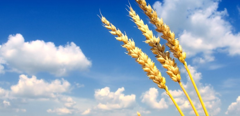 Grain. Photo: Shutterstock