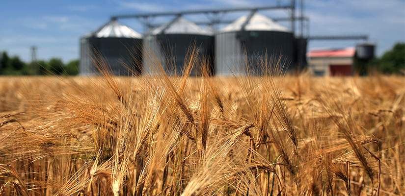 Queensland's agriculture industry has maintained its production value despite five years of significant drought, according to a new report.