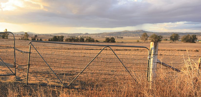 With drought impacting farmers in eastern Australia, ABHR speaks to Grains Analyst Cheryl Kalisch Gordon about the potential flow-on effects for the bulk handling industry.