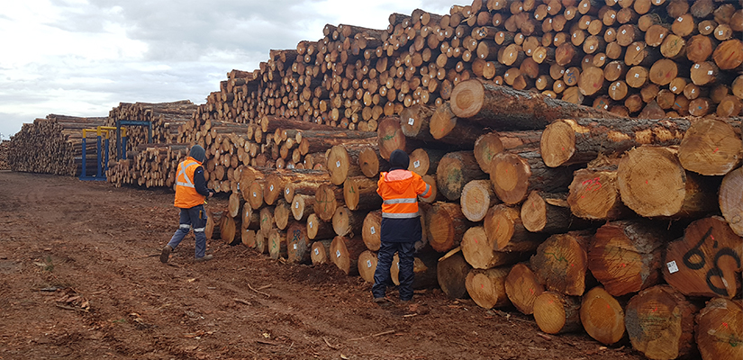 One of Australia's largest forest products logistics providers has secured a multi-million deal to provide log marshalling services in Portland, Victoria.